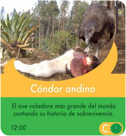 Condor Andino - Actividades Sábados, domingos y feriados