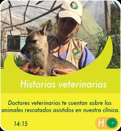 Historias veterinarias - Actividades Sábados, domingos y feriados