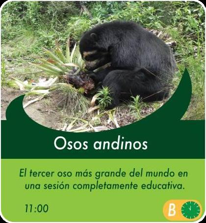 Osos Andinos - Actividades Sábados, domingos y feriados