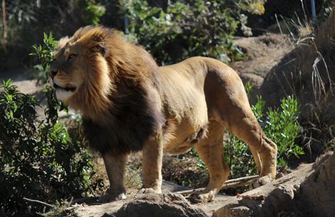 Zoo-Bioparque-Amaru-Cuenca-2015... UN AÑO LLENO DE EXCELENTES RESULTADOS!!