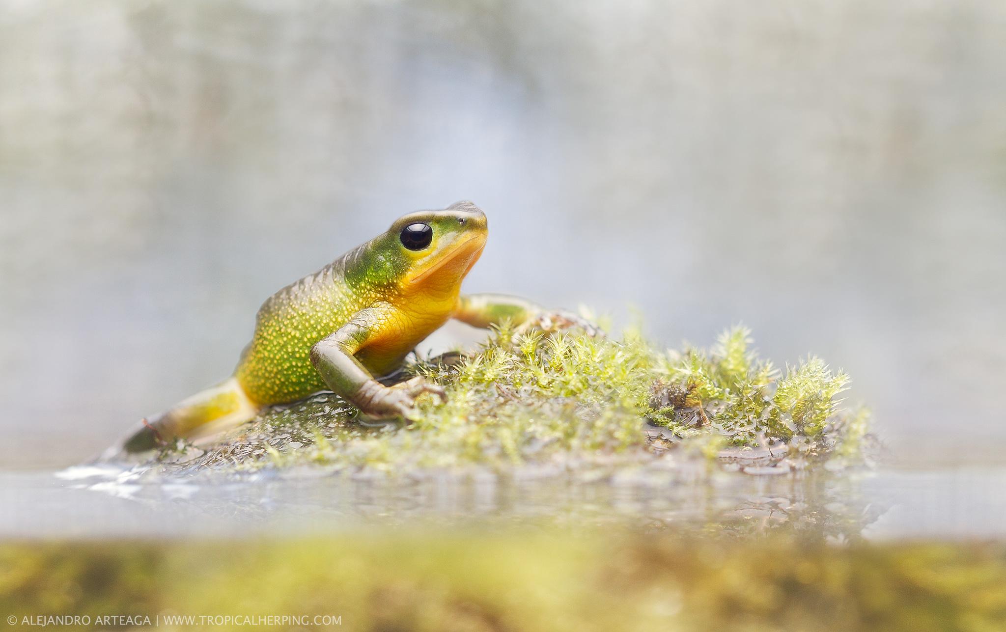 Zoo-Bioparque-Amaru-Cuenca-Conservación de la diversidad de anfibios ecuatorianos y uso sostenible de sus recursos genéticos