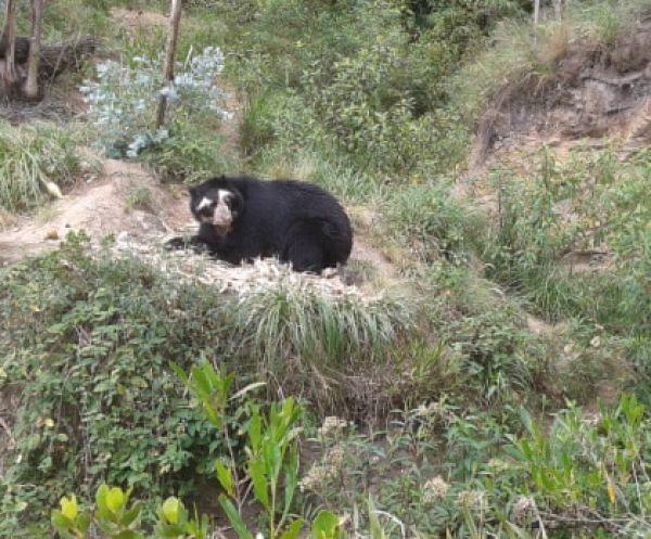Zoo-Bioparque-Amaru-Cuenca-El Rol de los Zoologicos en el país