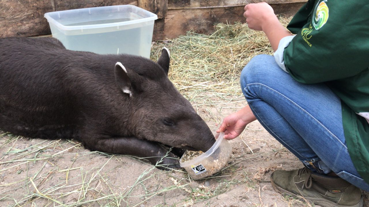 Zoo-Bioparque-Amaru-Cuenca-APOYA A LOS ANIMALES SILVESTRES RESCATADOS POR AMARU