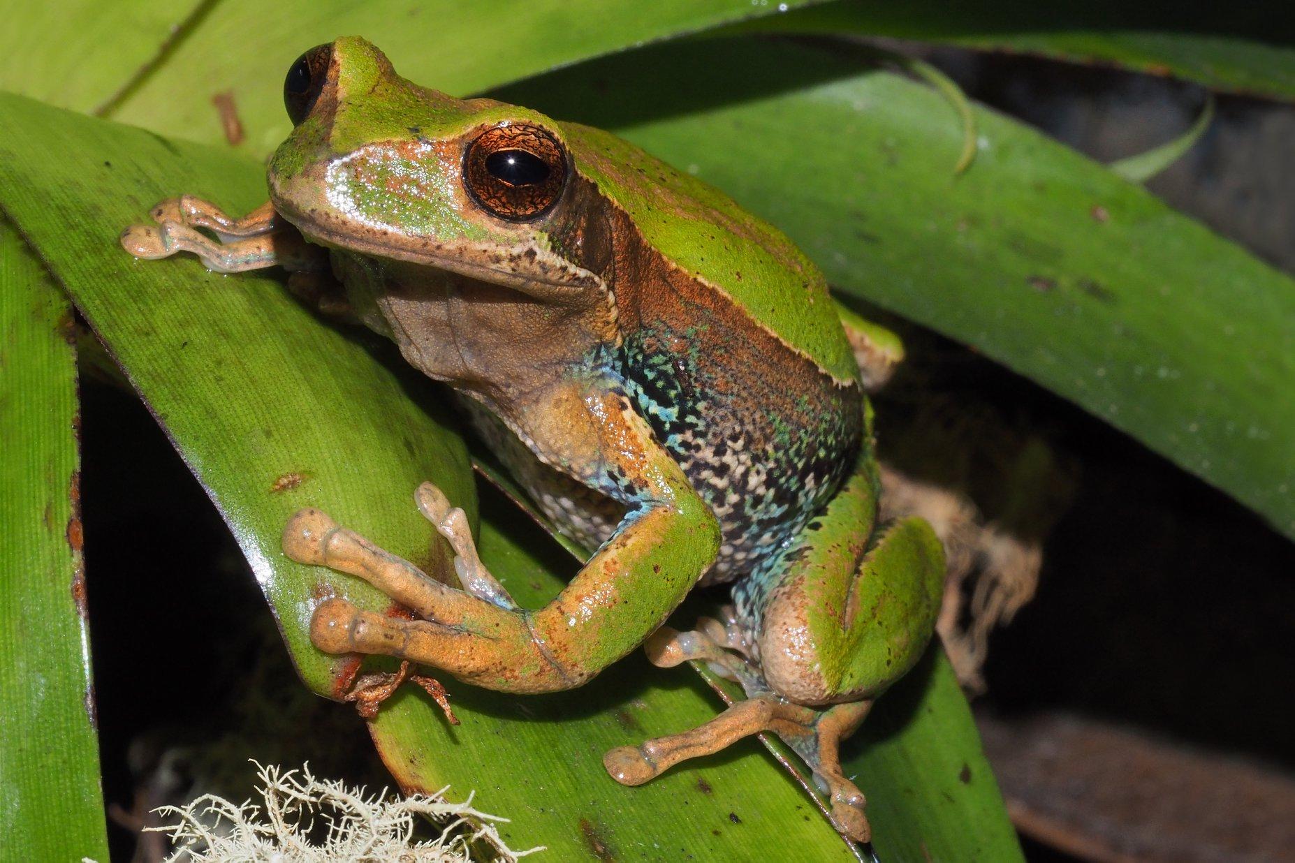 Zoo-Bioparque-Amaru-Cuenca-Cuenca será sede del encuentro sobre conservación de anfibios