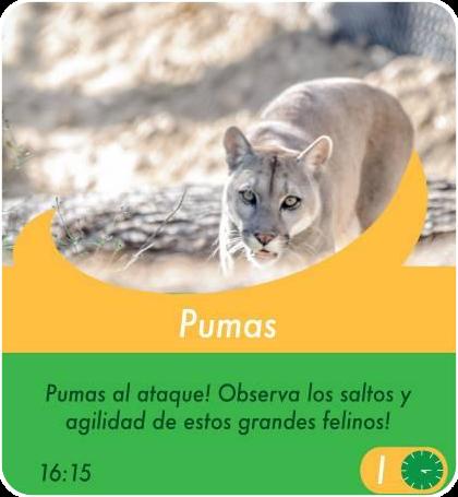 Pumas - Actividades Sábados, domingos y feriados